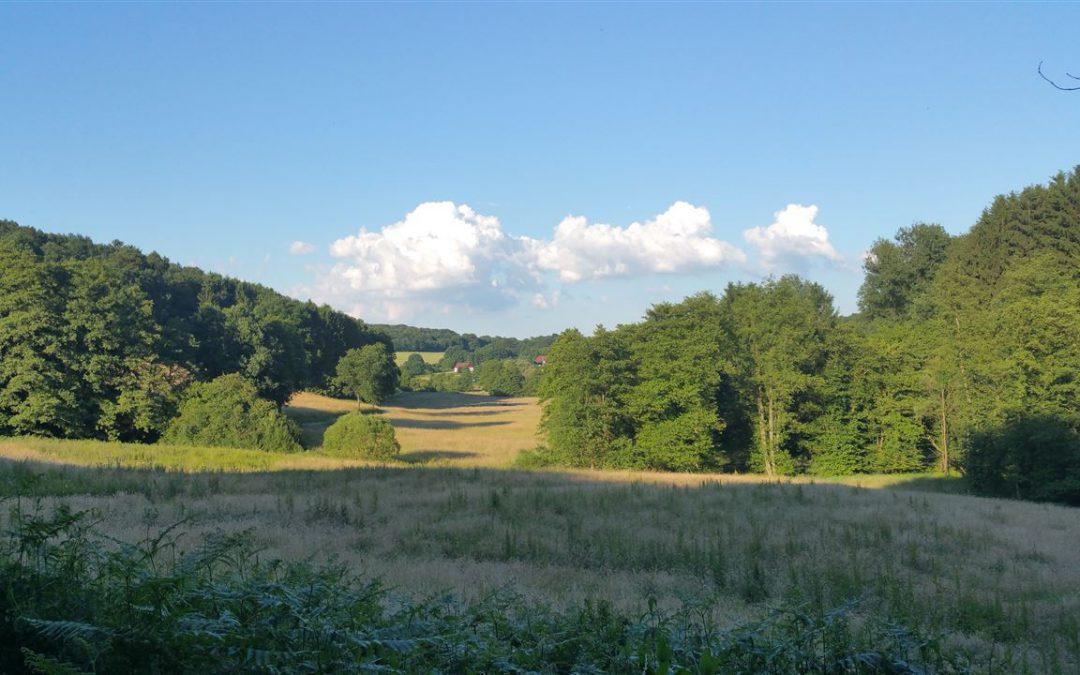 Lyrisch-philosophischer Spaziergang im Naafbachtal