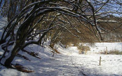 Vorweihnachtlicher Weg durch das Naafbachtal – Wanderung nach Marialinden am 16. Dezember