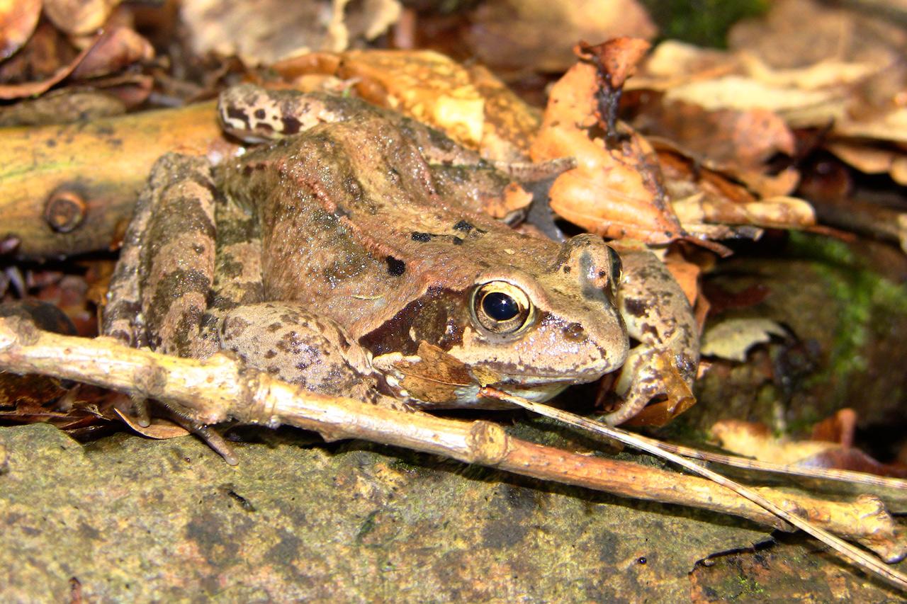Amphibienschutz