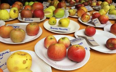 Köstlicher Saft aus den eigenen Äpfeln – Saftpresse Algert