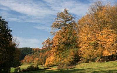 Spaziergang im Naafbachtal – Auch der Herbst hat schöne Seiten